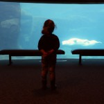 Our Second Home; The Vancouver Aquarium