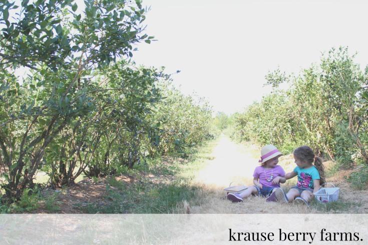 KrauseBerryFarmsHEADER